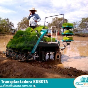 trasplantadora de arroz kubota